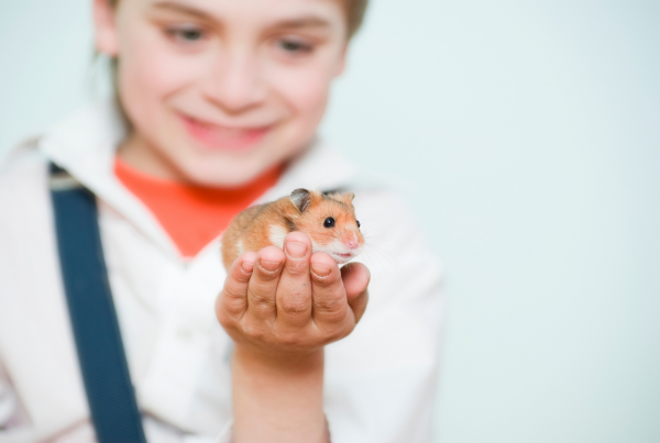 Beneficios psicológicos para nuestros hijos al tener mascota